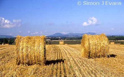 Round Straw Bales And The Breidden Hills